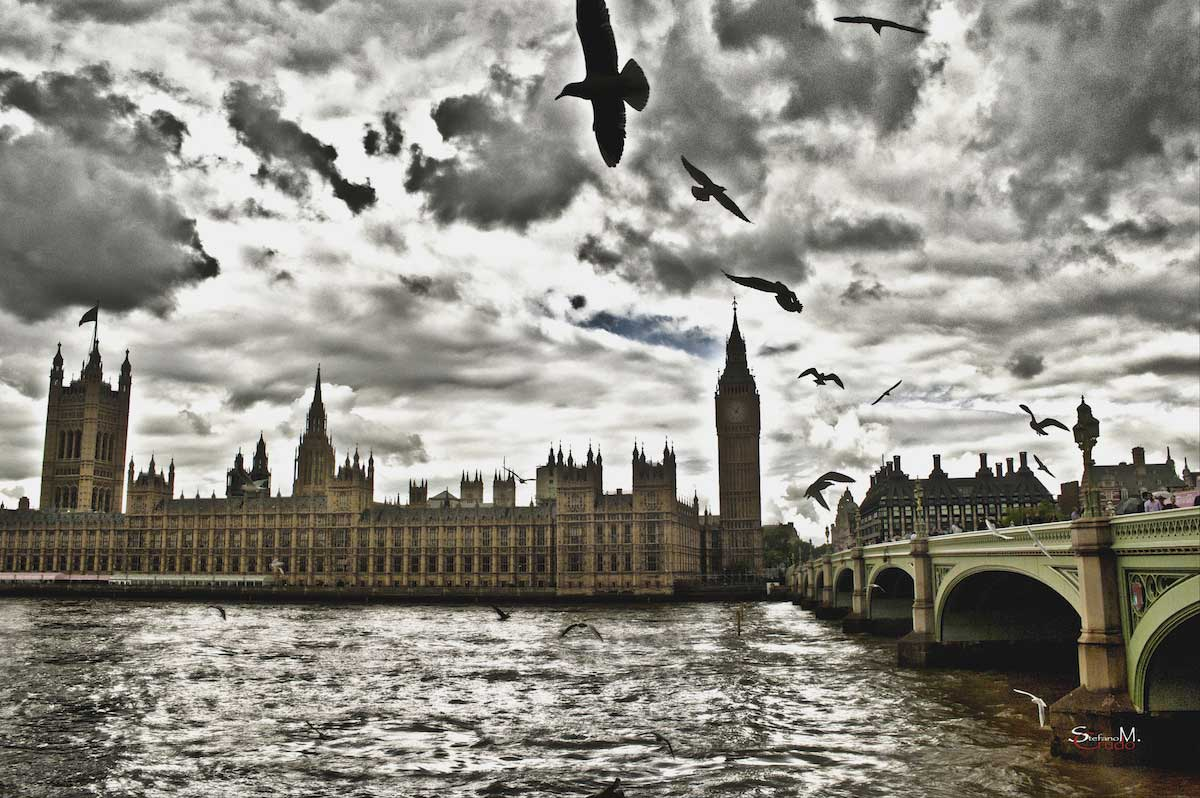 LONDRA - Birds